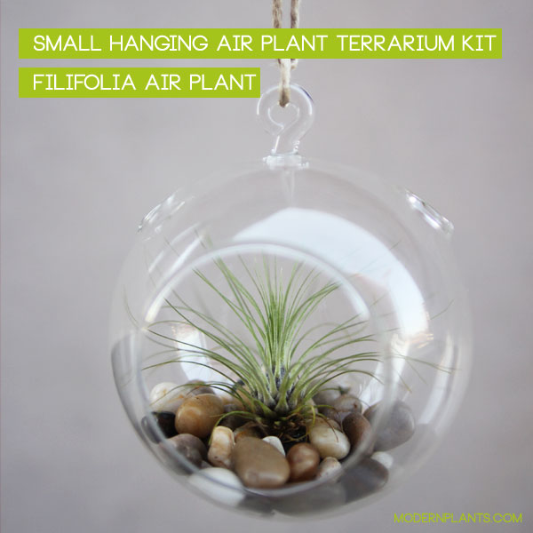 air plants in glass orbs