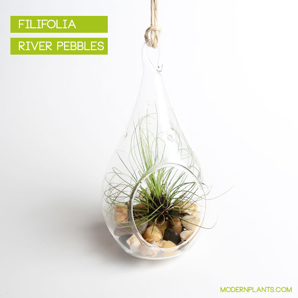 teardrop hanging air plant terrarium